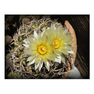 Floraciones amarillas del cactus tarjeta postal