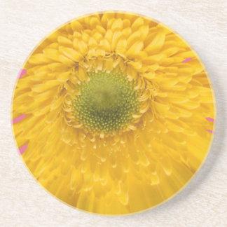 Floraciones amarillas del zinnia en un práctico de posavasos cerveza
