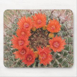 Floraciones anaranjadas del cactus de barril mouse pads
