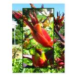Floraciones anaranjadas rojas de la postal del lin