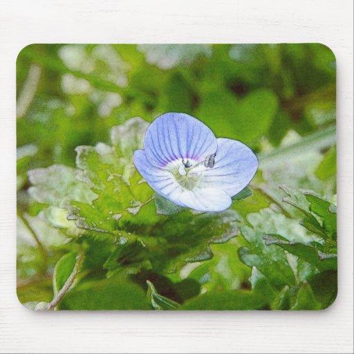 Floraciones azules del arrastramiento Speedwell Tapetes De Ratón