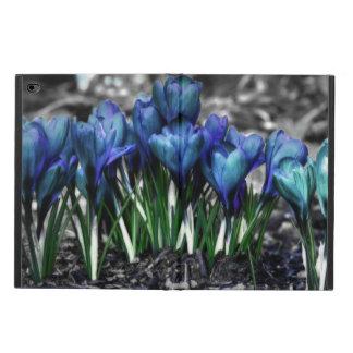 Floraciones azules del azafrán de la aguamarina
