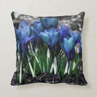 Floraciones azules del azafrán de la aguamarina cojín