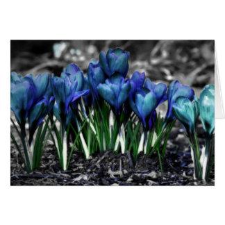 Floraciones azules del azafrán de la aguamarina tarjeta de felicitación