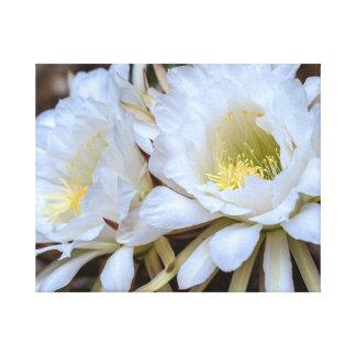 Floraciones blancas del cactus de Echinopsis Impresion De Lienzo
