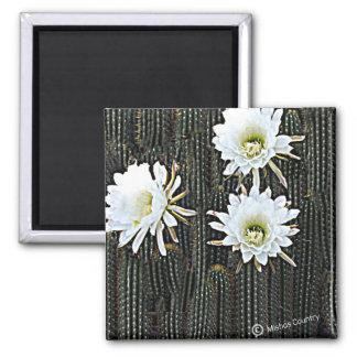 Floraciones blancas del cactus imán cuadrado
