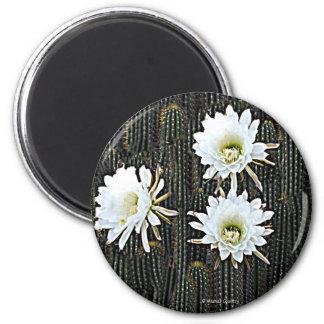 Floraciones blancas del cactus imán redondo 5 cm