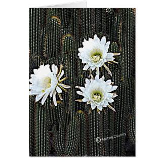 Floraciones blancas del cactus tarjeta de felicitación