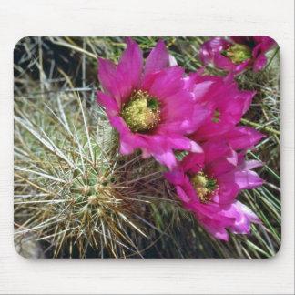 Floraciones carmesís en las flores del cactus tapetes de ratón