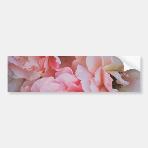 Floraciones color de rosa rosadas apacibles - foto pegatina de parachoque