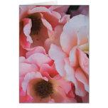 Floraciones color de rosa rosadas apacibles - foto tarjeta
