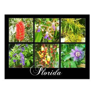 Floraciones coloridas en la Florida Tarjetas Postales