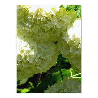 Floraciones de Bush de la bola de nieve Invitación 13,9 X 19,0 Cm
