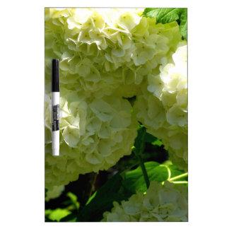 Floraciones de Bush de la bola de nieve Pizarra