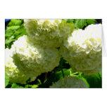 Floraciones de Bush de la bola de nieve Tarjetas