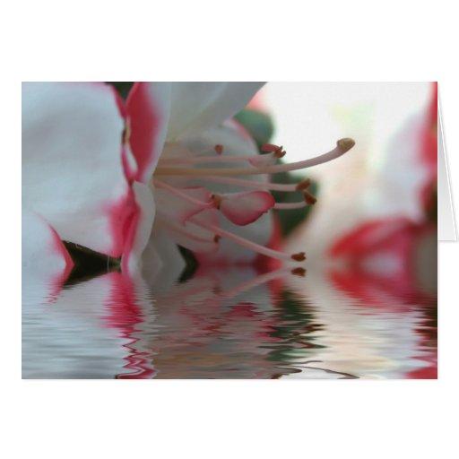Floraciones de la azalea en agua felicitacion