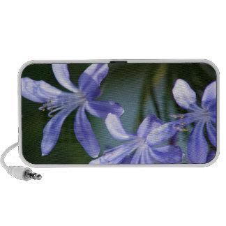 Floraciones de la flor del Agapanthus Portátil Altavoz
