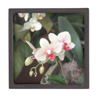 Floraciones de la orquídea cajas de recuerdo de calidad