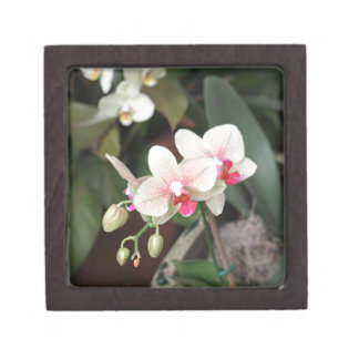 Floraciones de la orquídea caja de recuerdo de calidad
