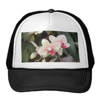 Floraciones de la orquídea gorros bordados