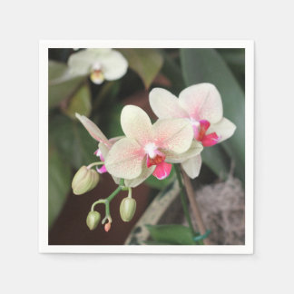 Floraciones de la orquídea servilletas de papel