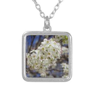 Floraciones de la pera de Bradford Collar Plateado