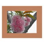 Floraciones de la primavera en rosa foto