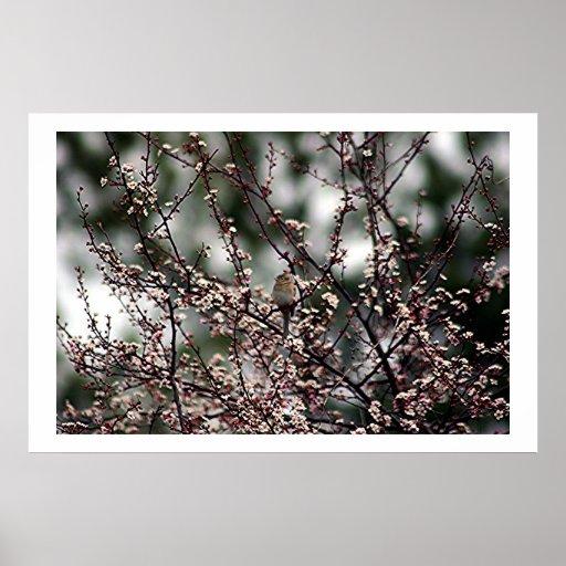 Floraciones de la primavera póster