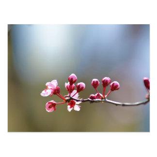 Floraciones de la primavera postales