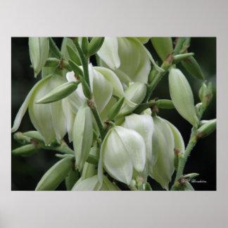 Floraciones de la yuca posters