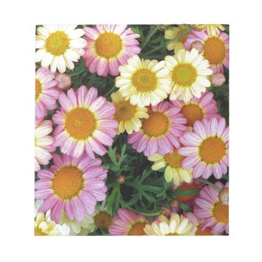 Floraciones de las margaritas de la primavera bloc