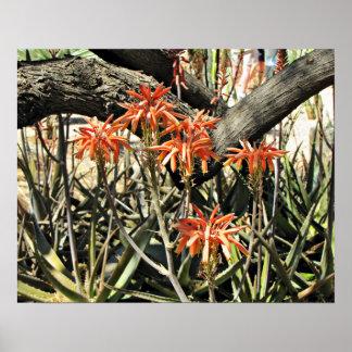 Floraciones del áloe póster
