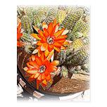 Floraciones del cactus de la cuerda postales