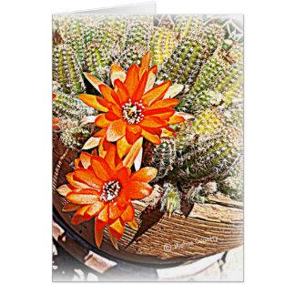 Floraciones del cactus de la cuerda tarjeta