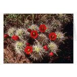 Floraciones del cactus en las flores del rosa de l tarjeton