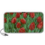 Floraciones del campo del tulipán en la primavera