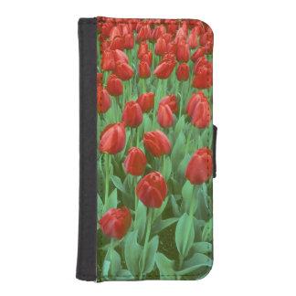 Floraciones del campo del tulipán en la primavera fundas tipo billetera para iPhone 5