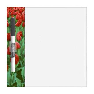 Floraciones del campo del tulipán en la primavera pizarras blancas