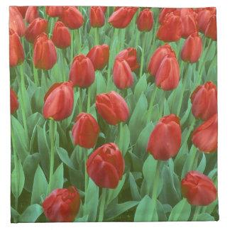 Floraciones del campo del tulipán en la primavera servilletas