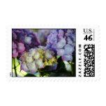 Floraciones del Hydrangea