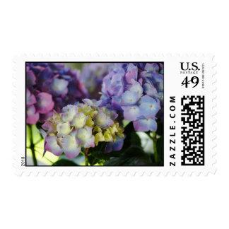 Floraciones del Hydrangea Sellos
