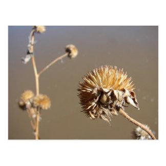 Floraciones del invierno de New México Tarjetas Postales