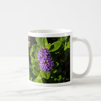 Floraciones del MOR de INiS Taza De Café