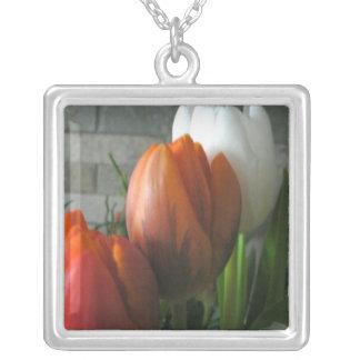 Floraciones del tulipán collar plateado