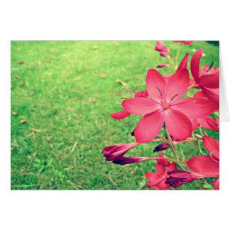 Floraciones descoloradas tarjeta pequeña