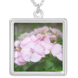 Floraciones dulces rosadas delicadas de Guillermo Pendiente