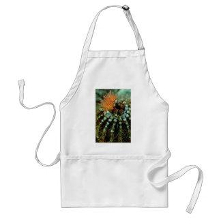 Floraciones en las flores del cactus delantal
