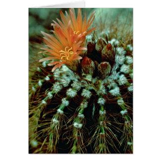 Floraciones en las flores del cactus felicitaciones