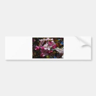 Floraciones florecientes rosadas de Crabapple Pegatina Para Auto