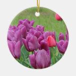 Floraciones hermosas de las flores púrpuras de los adorno de navidad